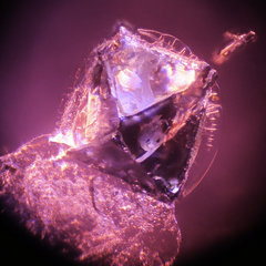 Inclusions:Spinel - The Gemology Project